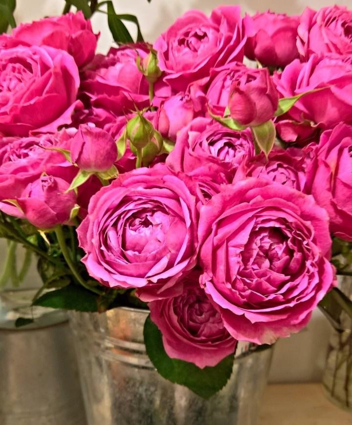 Misty Bubbles. Как же нас  вдохновляет этот сорт пионовидных роз! . Звоните +79000001133 Рашпилевская 28 Работаем с 8:00 до 20:00 tiffanyblooms.ru . #букеткраснодар #букет_от_тиффани #tiffanyblooms #flowers #цветыкрд #доставкацветовкраснодар #доставкабукетовкраснодар #букетвшляпнойкоробке